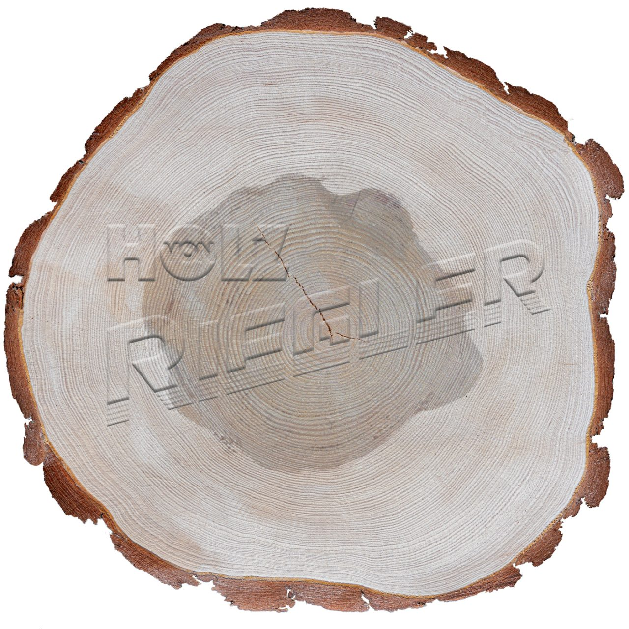 Kiefer Scheibe Holz Riegler mit Logo-02-20